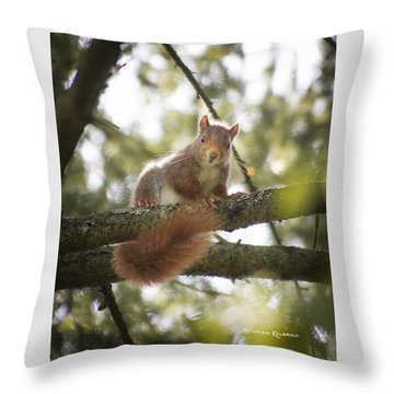 Throw Pillow featuring the photograph Squirrel On The Spot by Stwayne Keubrick