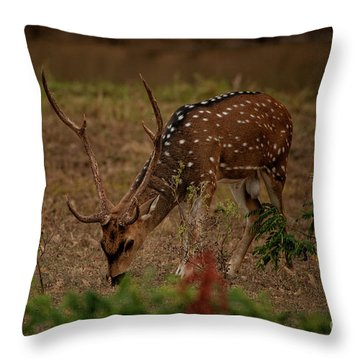 Sri Lankan Axis Deer Throw Pillow