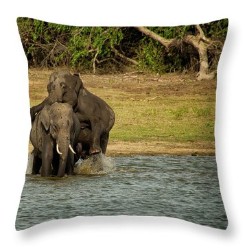 Sri Lankan Elephants  Throw Pillow