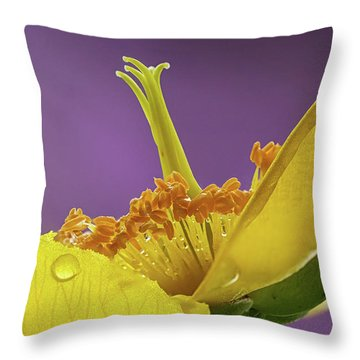St Johns Wort Flower Throw Pillow