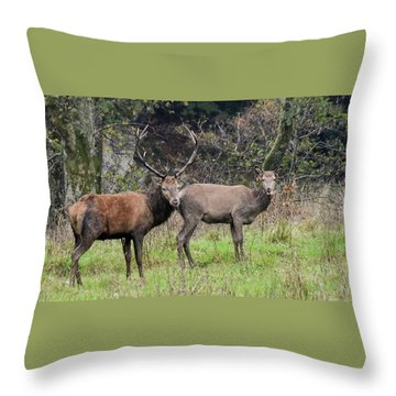 Stag And Doe  Throw Pillow
