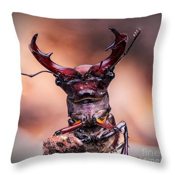 Stag Beetle Stare Down Throw Pillow