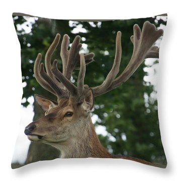Stag Head. Throw Pillow