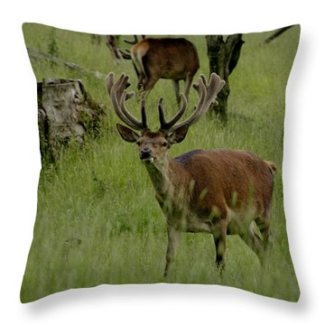 Stag Of The Herd. Throw Pillow