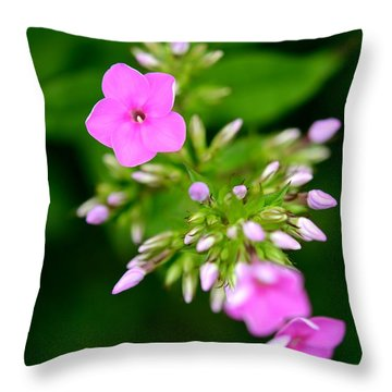 Throw Pillow featuring the photograph Stages Of Spring by Corinne Rhode