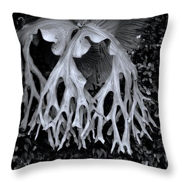 Throw Pillow featuring the photograph Staghorn Fern by Wayne Sherriff