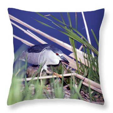 Stalking Black Crowned Night Heron Throw Pillow