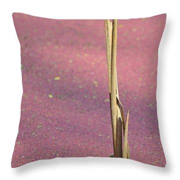 Stalking In A Pink Marsh Throw Pillow