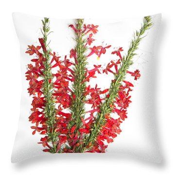Standing-cypress Throw Pillow