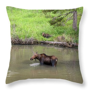 Throw Pillow featuring the photograph Standing Guard by James BO Insogna