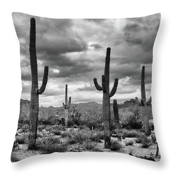 Throw Pillow featuring the photograph Standing Saquaros by Monte Stevens