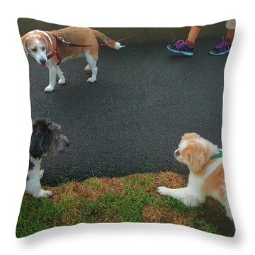 Throw Pillow featuring the photograph Standoff by Roger Bester