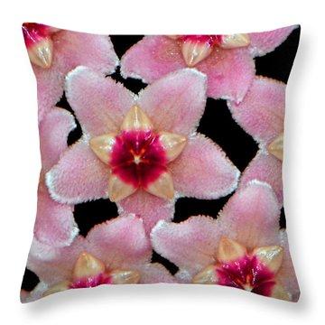 Stapelia Hirsuta - Starfish Flower 002 Throw Pillow by George Bostian