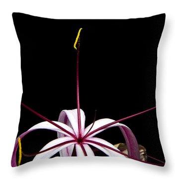 Throw Pillow featuring the photograph Star Flower by Ken Barrett