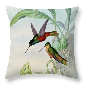 Star Fronted Hummingbird Throw Pillow