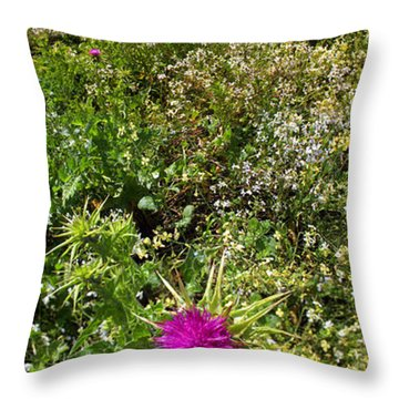Star Thistle Flower In Marin County California Panorama Throw Pillow by Wernher Krutein
