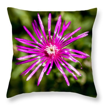 Starburst Of The Wildflowers Throw Pillow by John Haldane