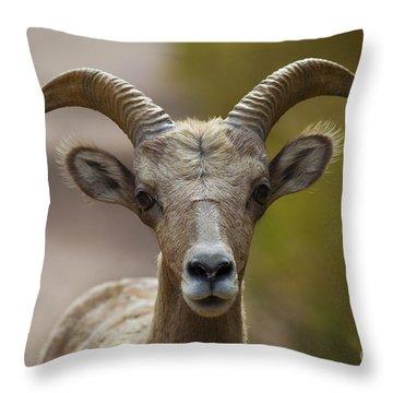 Stare Down Throw Pillow