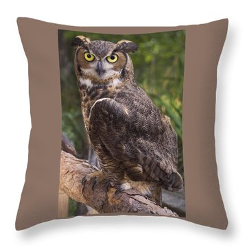 Stare Me Down Baby Throw Pillow