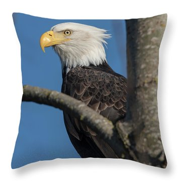 Staredown By Eagle  Throw Pillow