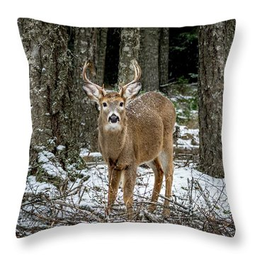 Staring Buck Throw Pillow