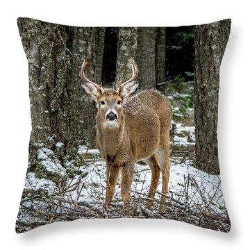 Staring Buck Throw Pillow