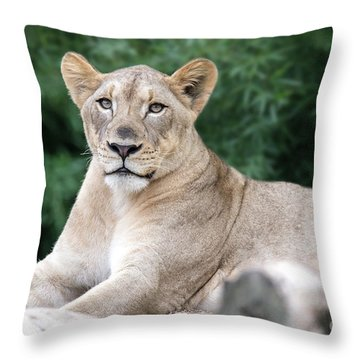 Staring Throw Pillow