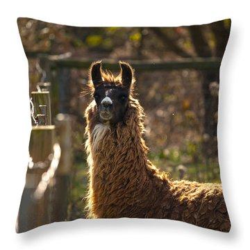 Staring Llama Throw Pillow