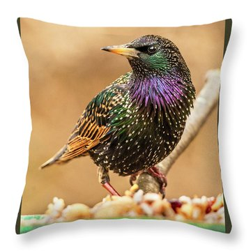 Starling In Glorious Color Throw Pillow