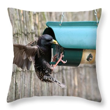 Starling On Bird Feeder Throw Pillow by Gordon Auld