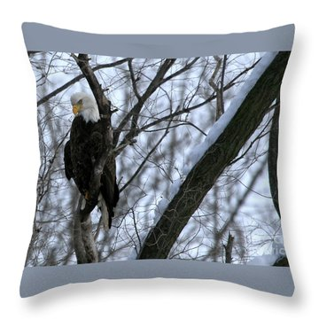 Throw Pillow featuring the photograph Starved Rock Eagle by Paula Guttilla