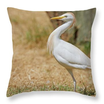 Throw Pillow featuring the photograph Stately Walking Cattle Egret by Nick Biemans
