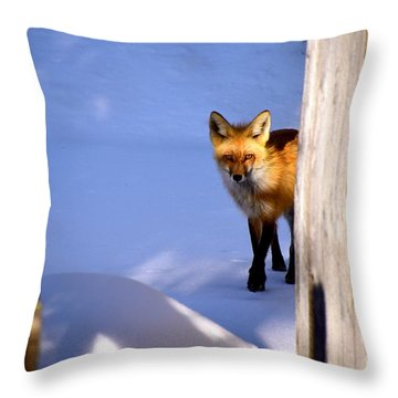 Throw Pillow featuring the photograph Stealthy by Johanne Peale