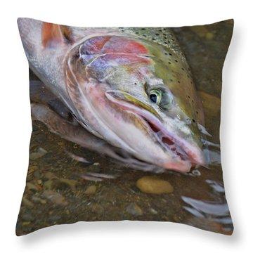 Steelhead  2 Throw Pillow