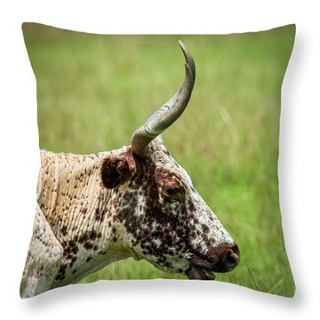 Throw Pillow featuring the photograph Steer Portrait by Paul Freidlund