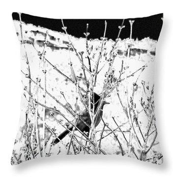 Stellar Jay   Throw Pillow by Will Borden