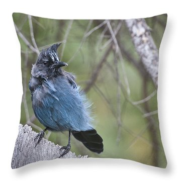 Throw Pillow featuring the photograph Stellar's Jay by Gary Lengyel
