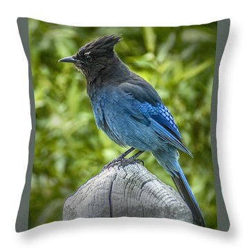 Stellar's Jay Throw Pillow