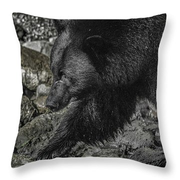 Stepping Into The Creek Black Bear Throw Pillow