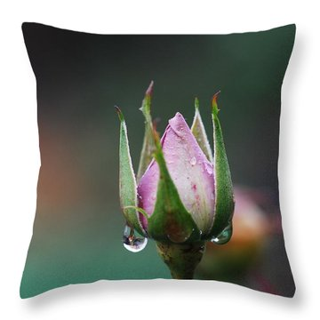 Sterling Rose Throw Pillow by Donna Blackhall