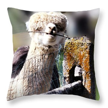 Sticks Taste Good Throw Pillow