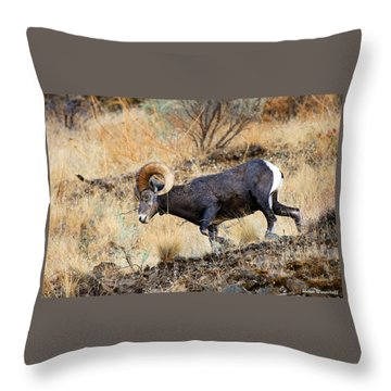 Still Com'n For You Throw Pillow