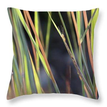Still Emerging - Throw Pillow