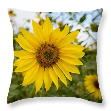 Still Shinning Throw Pillow
