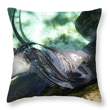 Throw Pillow featuring the photograph Stingray Wave by Francesca Mackenney