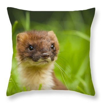 Mustelid Throw Pillows