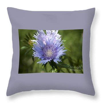 Stokes Aster 20120703_125a Throw Pillow by Tina Hopkins