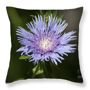 Stokes Aster 20120703_129a Throw Pillow by Tina Hopkins