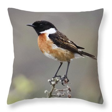 Stonechat Throw Pillow by Terri Waters