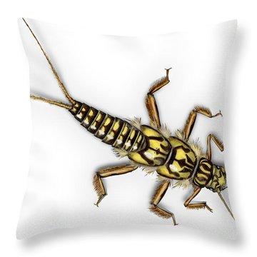 Stonefly Larva Nymph Plecoptera Perla Marginata - Steinflue -  Throw Pillow